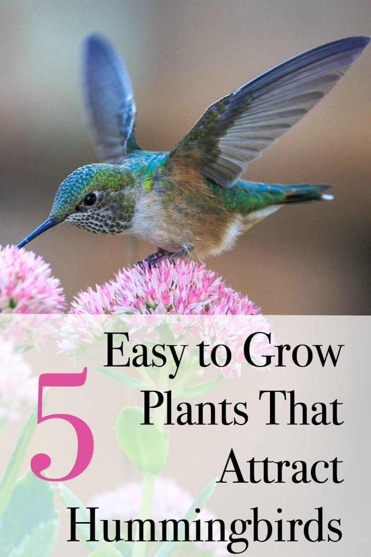 Flowers that attract hummingbirds and are super easy to grow! #hummingbirds #gardens