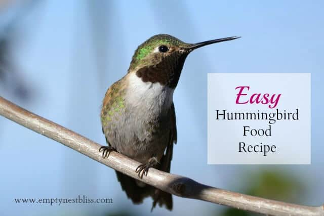 what to feed hummingbirds hummingbird recipe