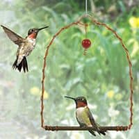Hummingbird Swings!