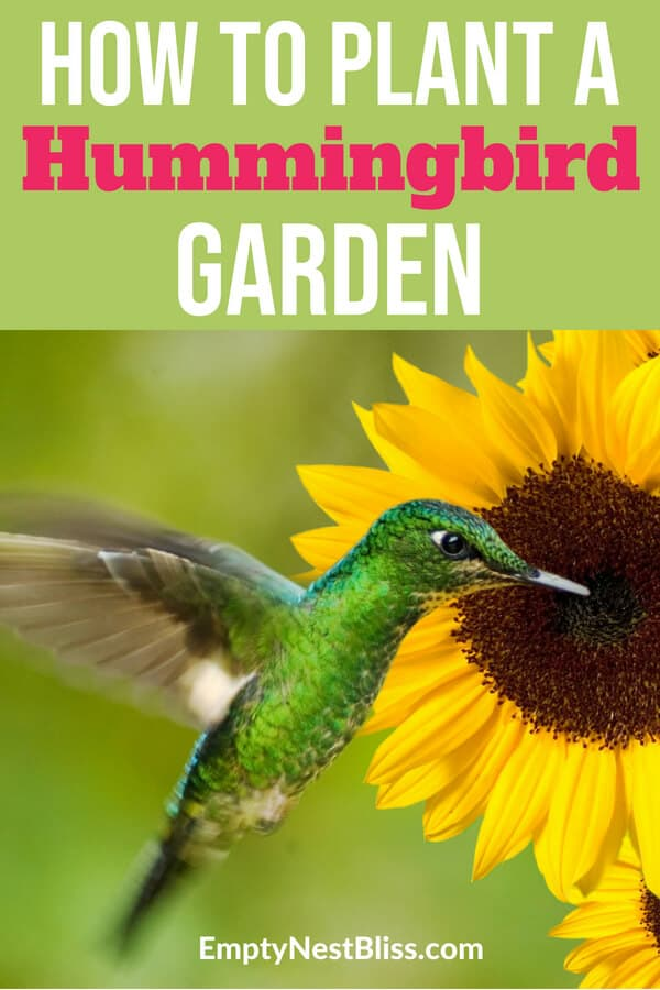 Hummingbird garden ideas, flowers and design! Attract hummingbirds with these easy to grow plants. #hummingbird #gardening #gardens