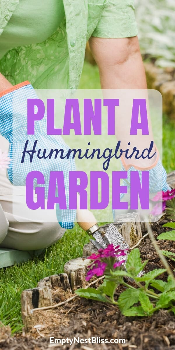 We replanted our yard with perennials and flowers that attract hummingbirds and butterflies.  We also added some fun garden decor that we love and the wildlife loves.  Do hummingbirds like mirrors because I have a great one on my fence!  I even figured out how to get hummingbirds to eat from your hand with a cool feeder.  Hummingbirds, a butterfly bush and honey bees were a bonus.