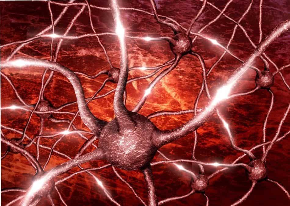 gut brain serotonin connection