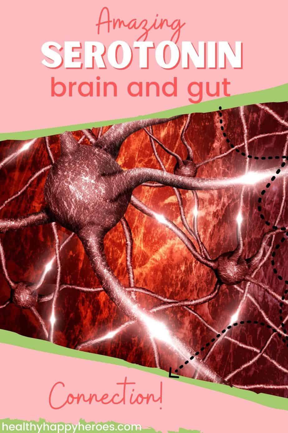 gut-brain connection serotonin