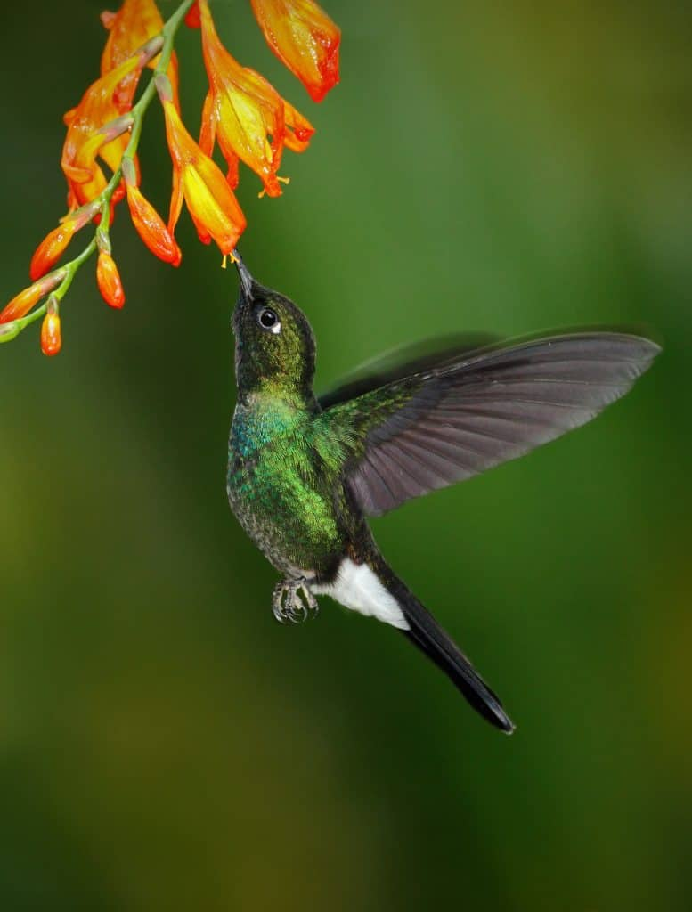 Building a hummingbird and butterfly garden with hummingbird plants and flowers for a colorful drought tolerant yard.