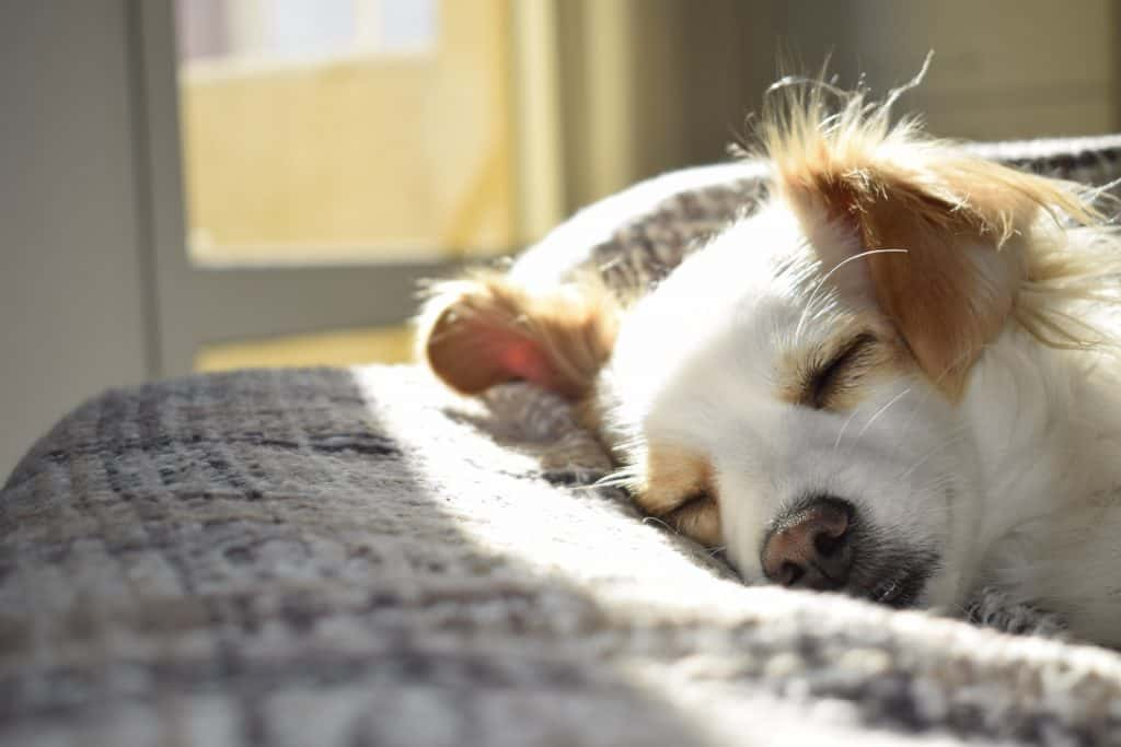 Get enough sleep as part of your daily gut health routine.