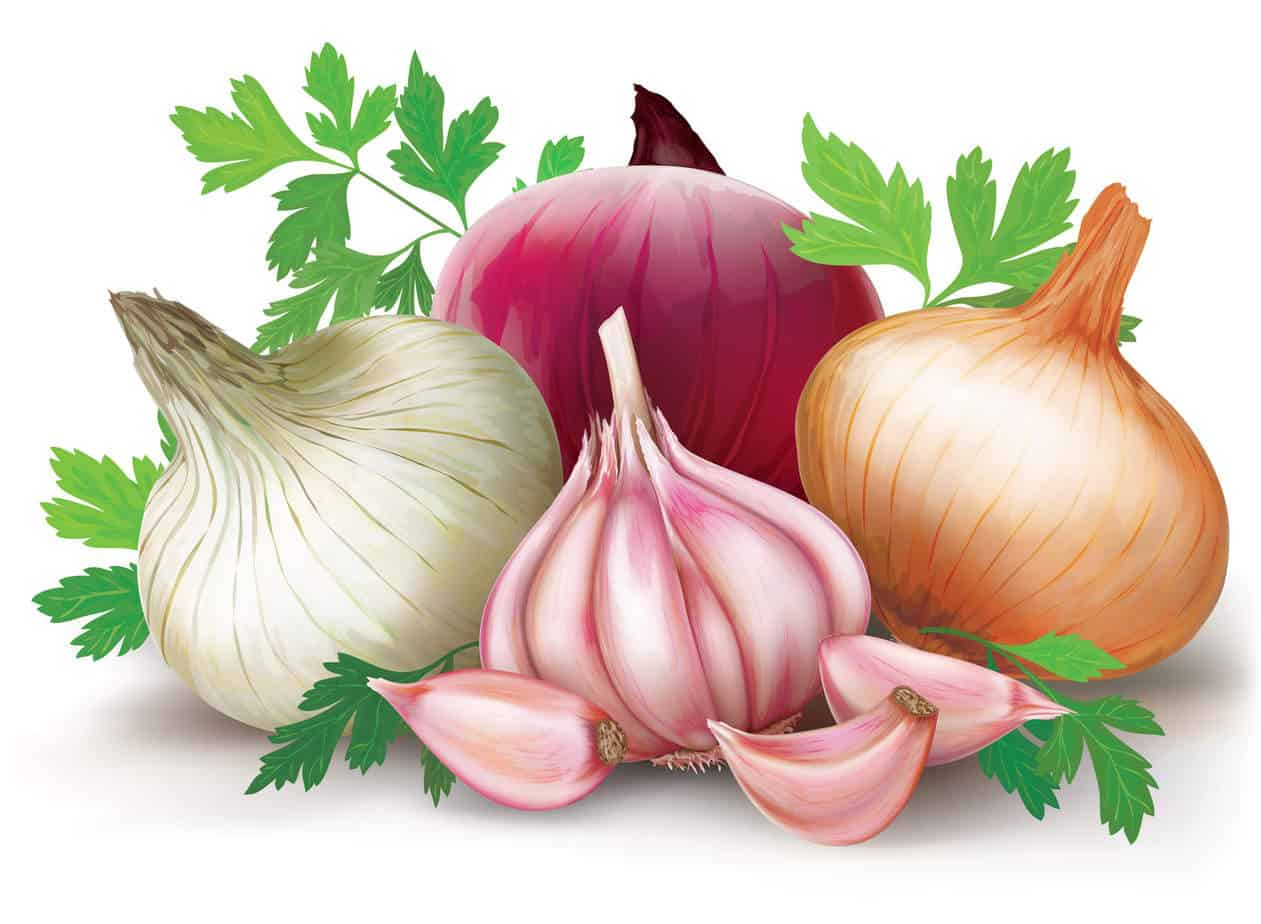 Prebiotics like onions and garlic are delicious additions to a gut health diet.