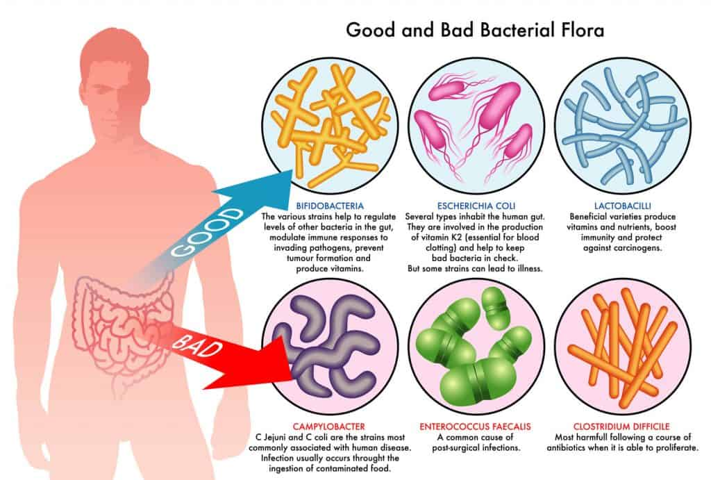 Graphic showing the main types of good and bad bacterial flora